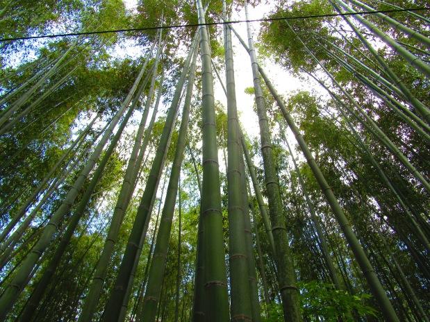 foresta bambù arashiyama