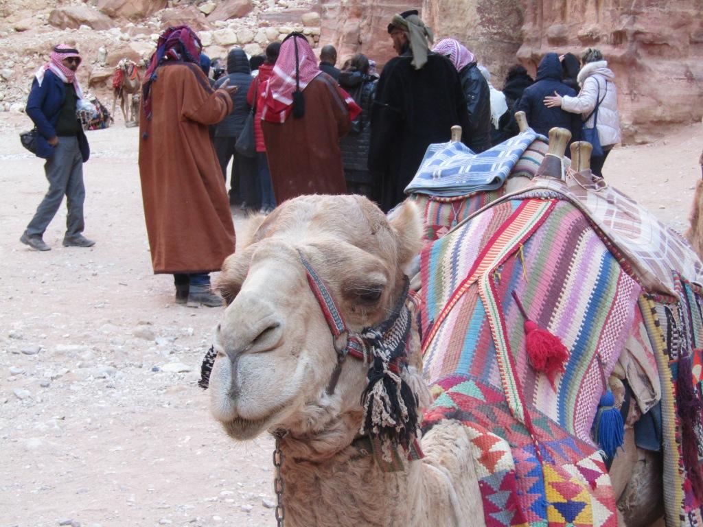 cammello petra