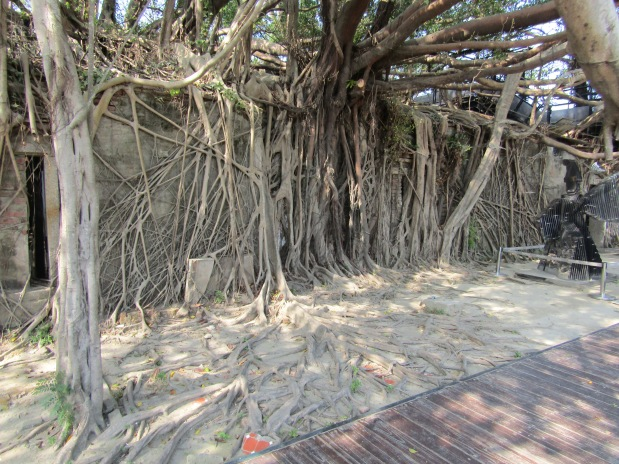 cosa vedere tainan anping tree house