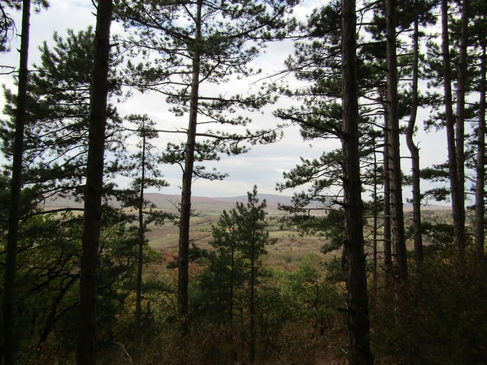 budaors foreste vicino budapest