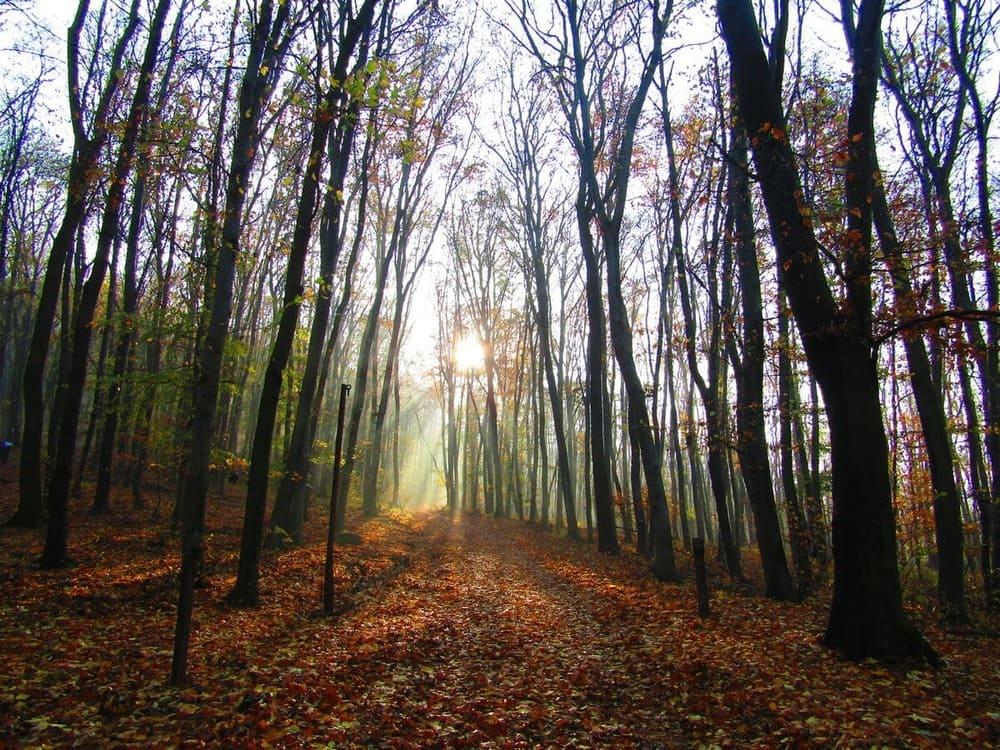 nagymaros trekking vicino budapest