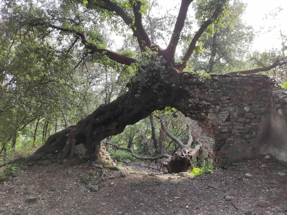 monumento naturale galeria antica
